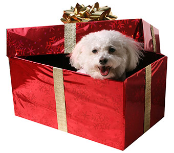 Dogs Like Gifts Too